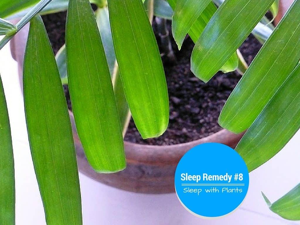Plants that Make you Sleep